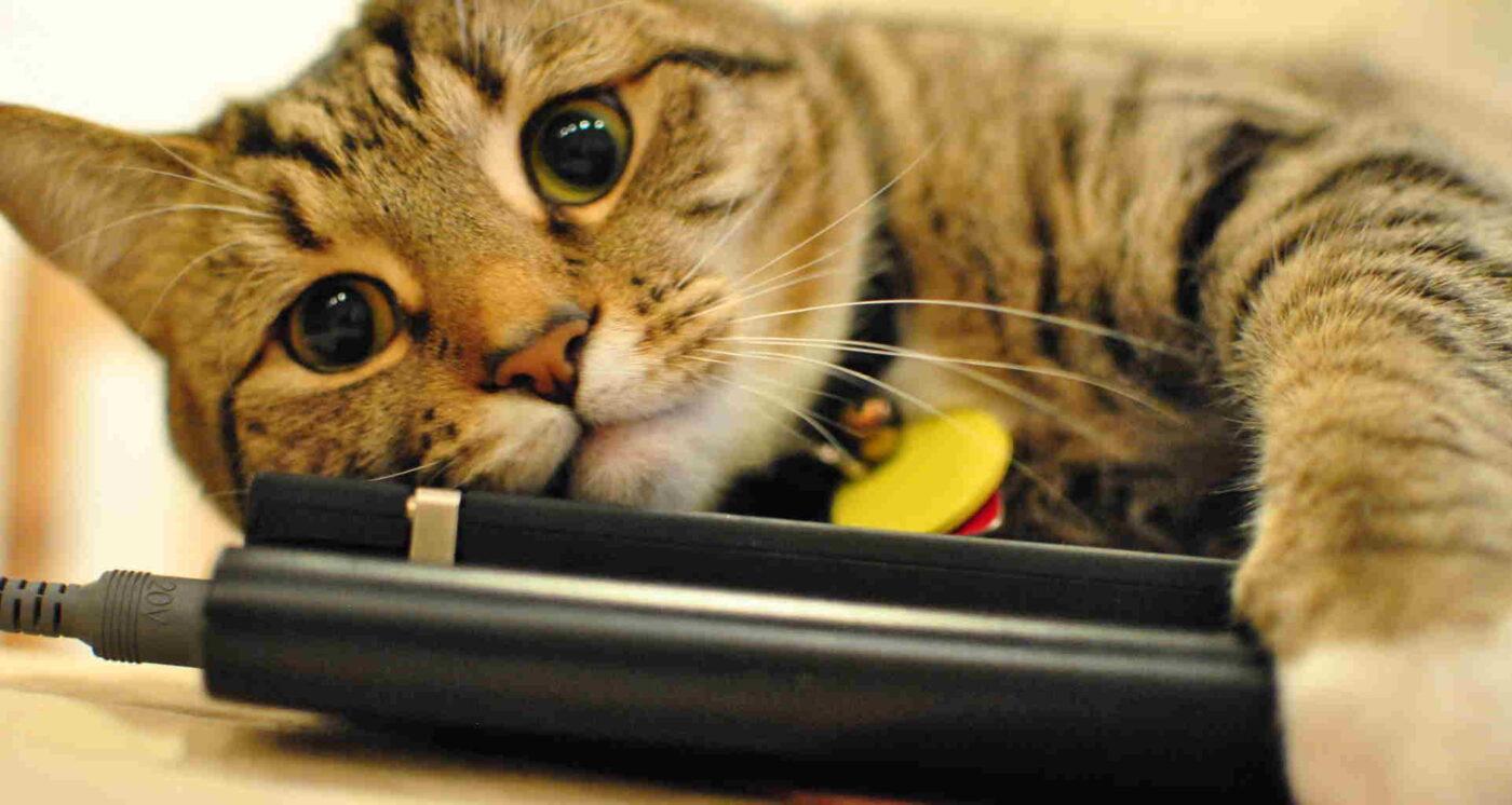باتری-گربه